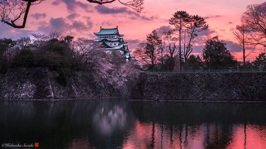sakura-japao (4)