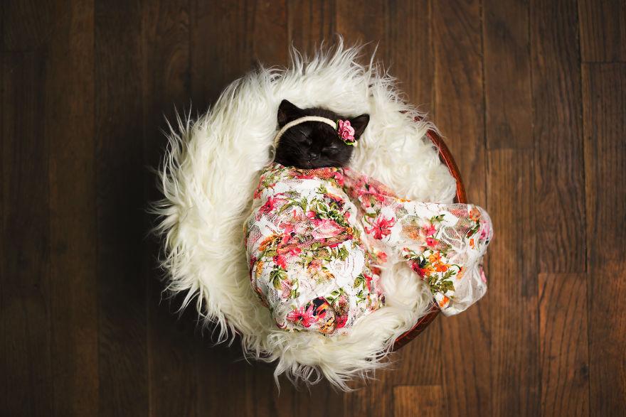 gatinho-recem-nascido (1)