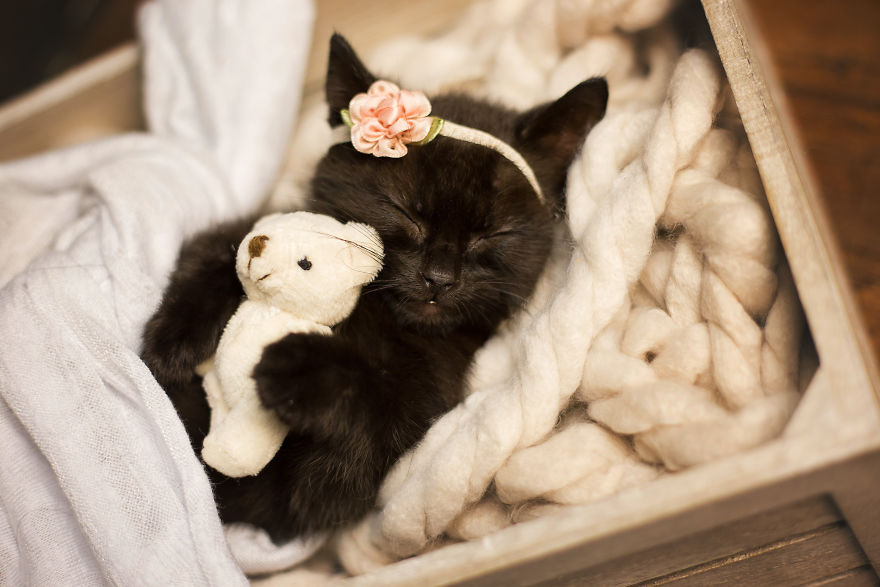 gatinho-recem-nascido (2)