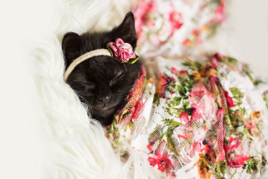 gatinho-recem-nascido (3)