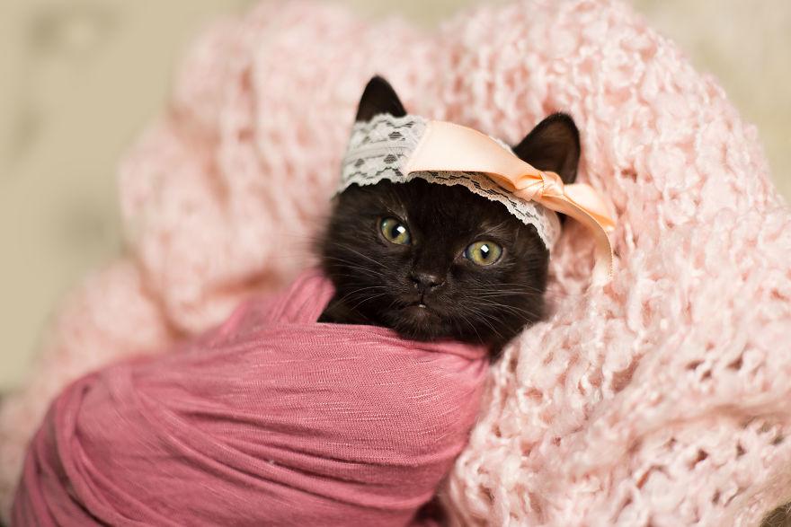 gatinho-recem-nascido (4)