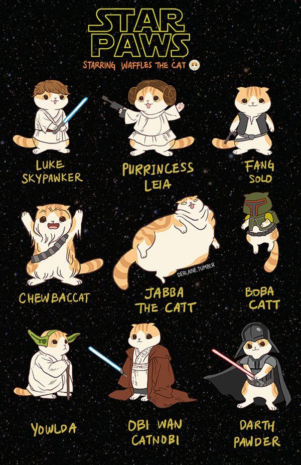 star-wars-gatinhos