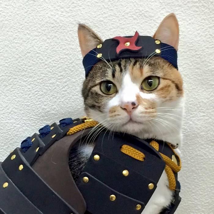 armadur-samurai-caes-gatos (5)