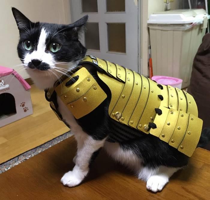 armadur-samurai-caes-gatos (6)