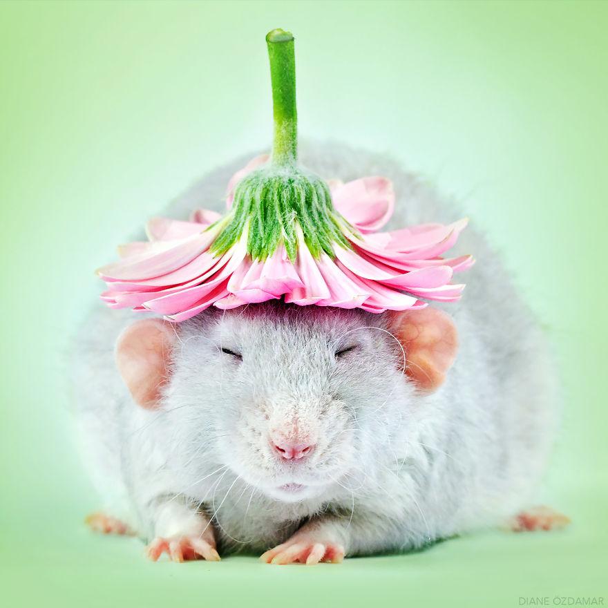 ratos-fofos (1)