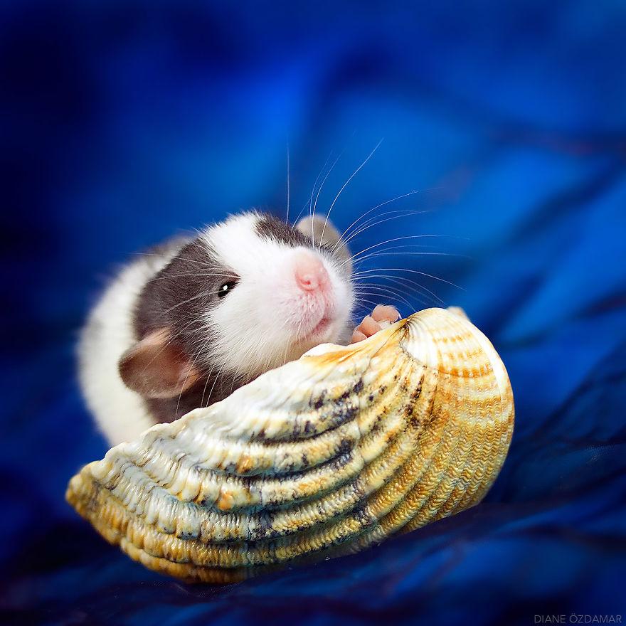 ratos-fofos (11)