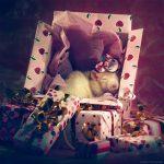 ratos-fofos (12)