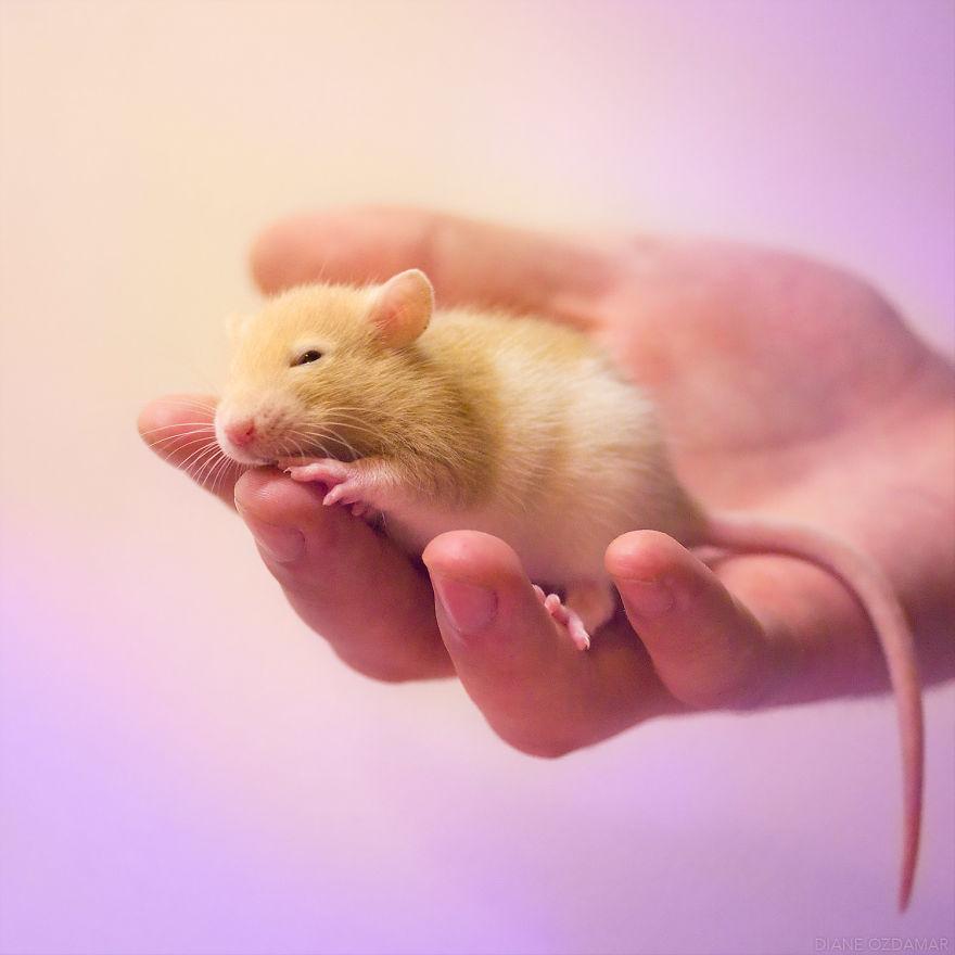 ratos-fofos (13)