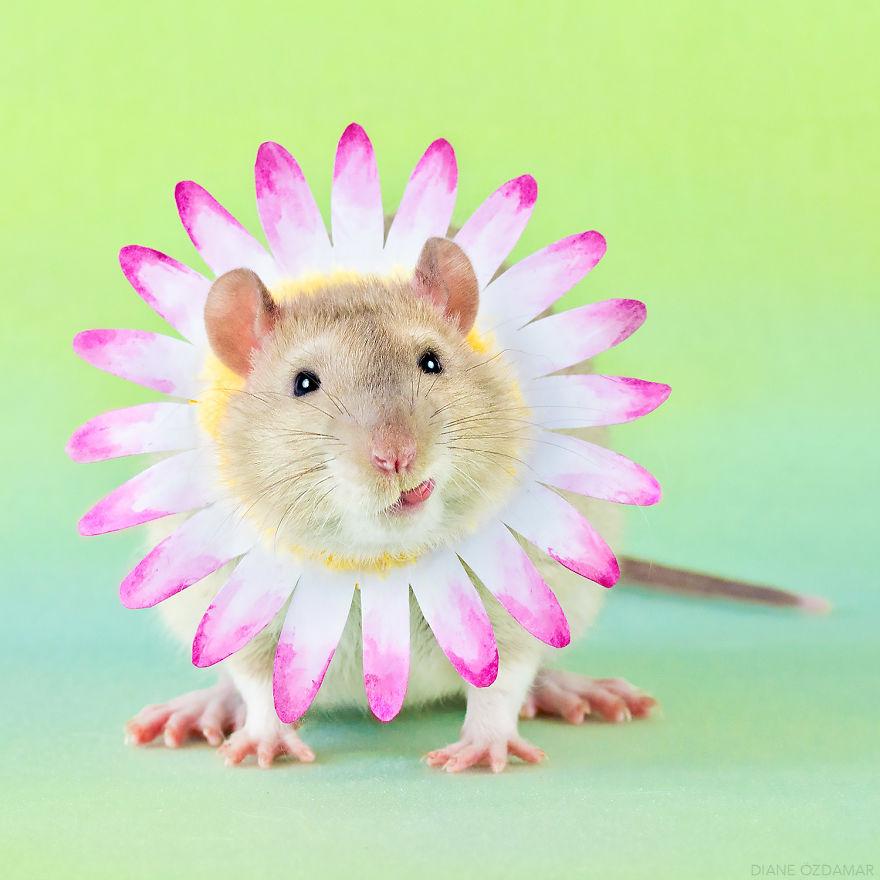 ratos-fofos (14)