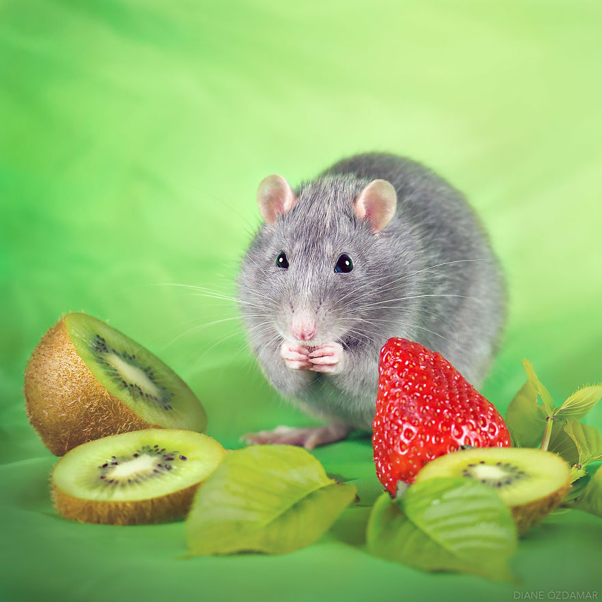 ratos-fofos (15)