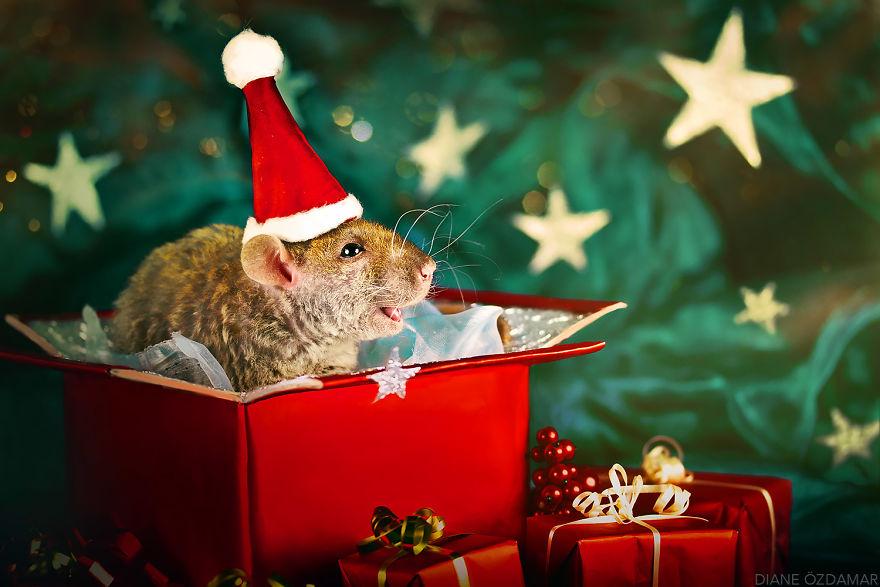 ratos-fofos (16)