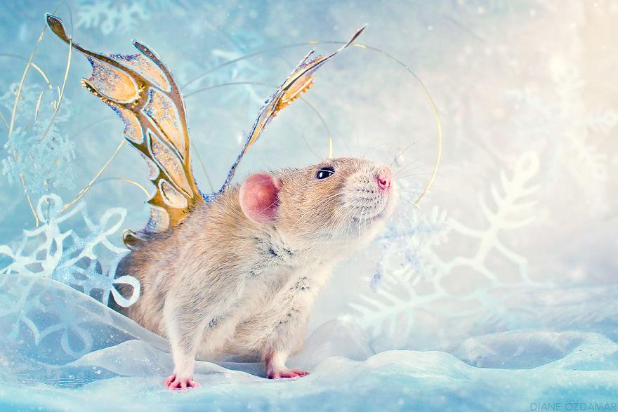 ratos-fofos (18)