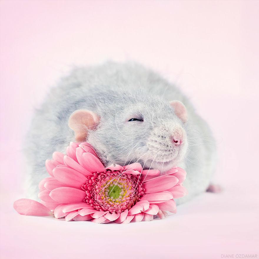 ratos-fofos (2)