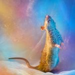 ratos-fofos (21)