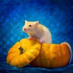 ratos-fofos (22)