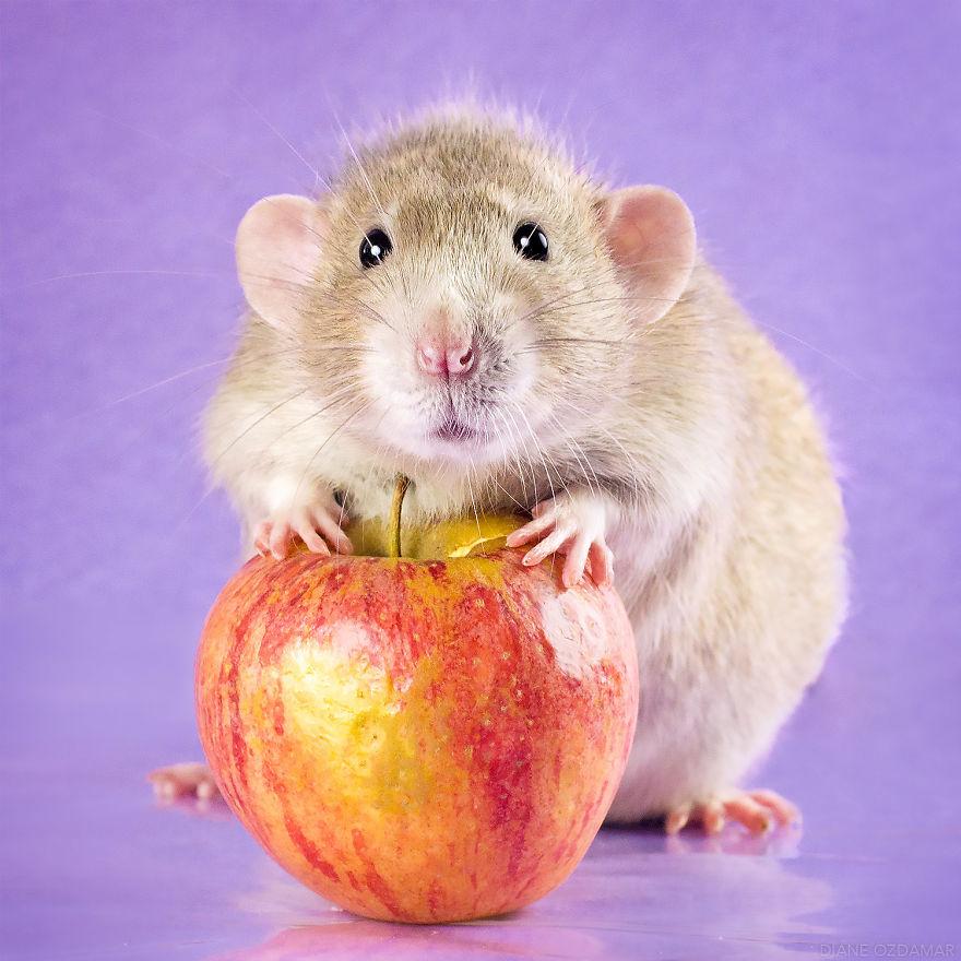 ratos-fofos (23)