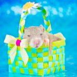 ratos-fofos (24)