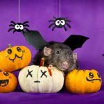 ratos-fofos (25)