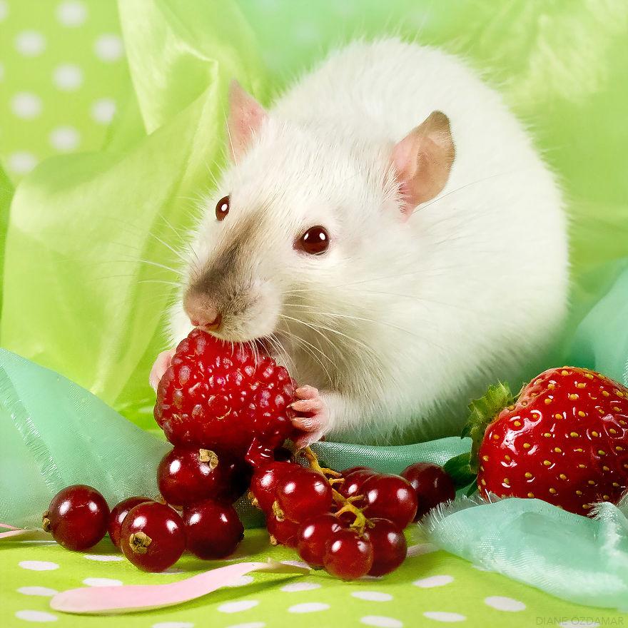 ratos-fofos (27)