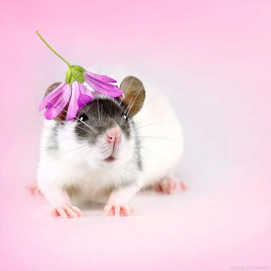 ratos-fofos (30)