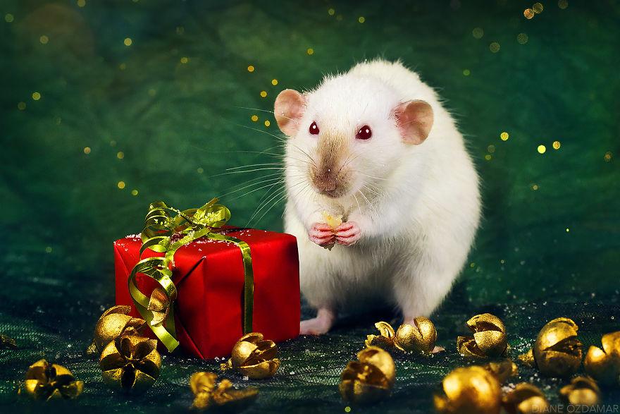 ratos-fofos (32)
