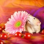 ratos-fofos (33)