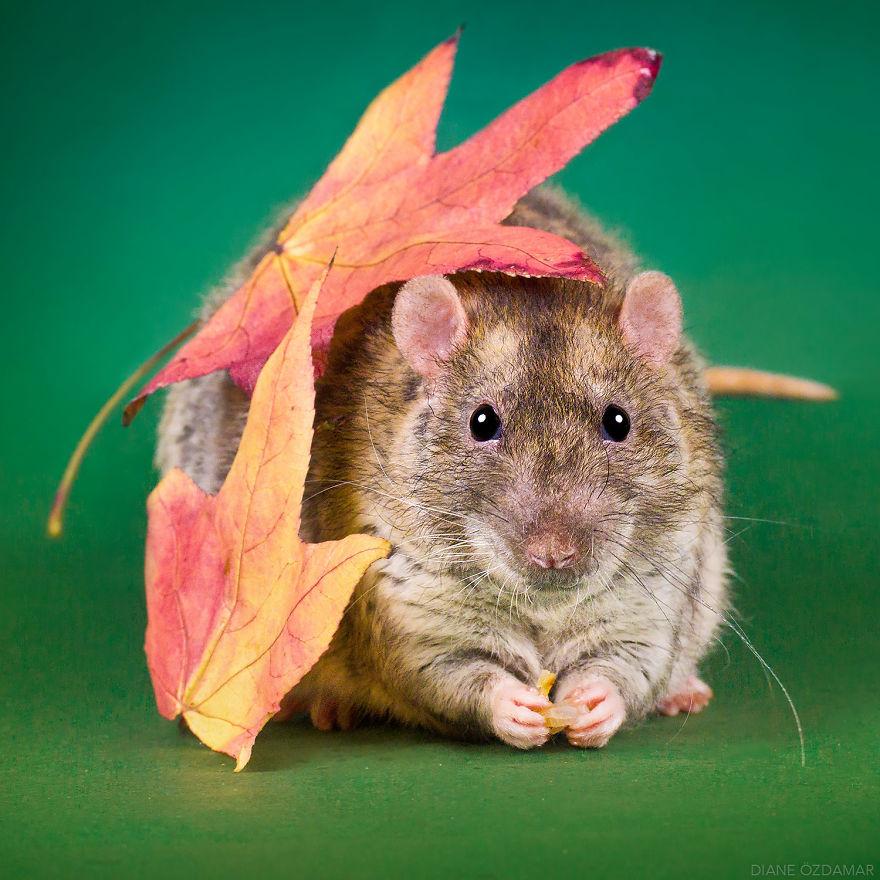 ratos-fofos (34)