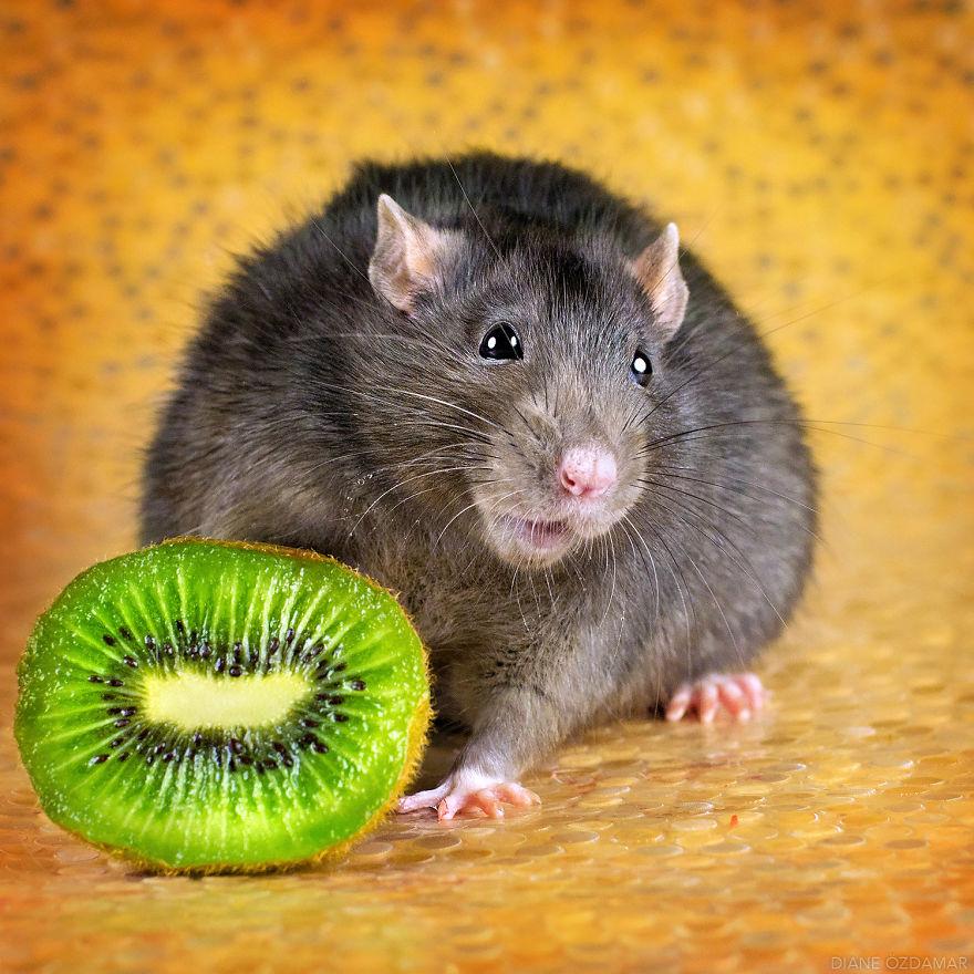 ratos-fofos (35)
