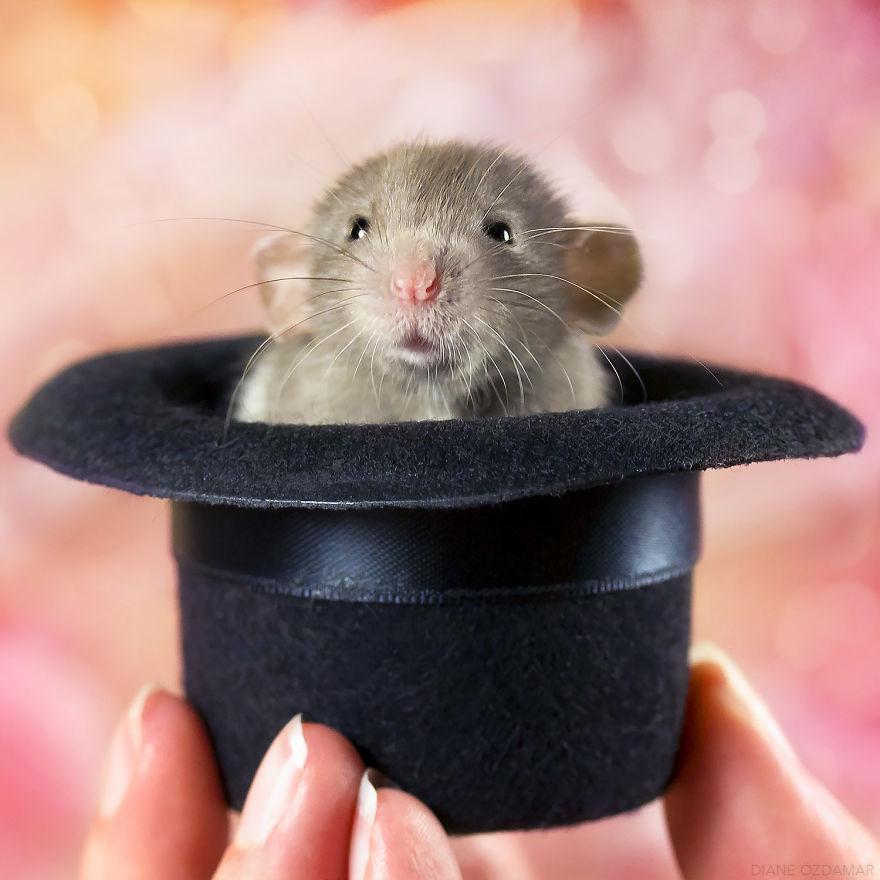 ratos-fofos (4)