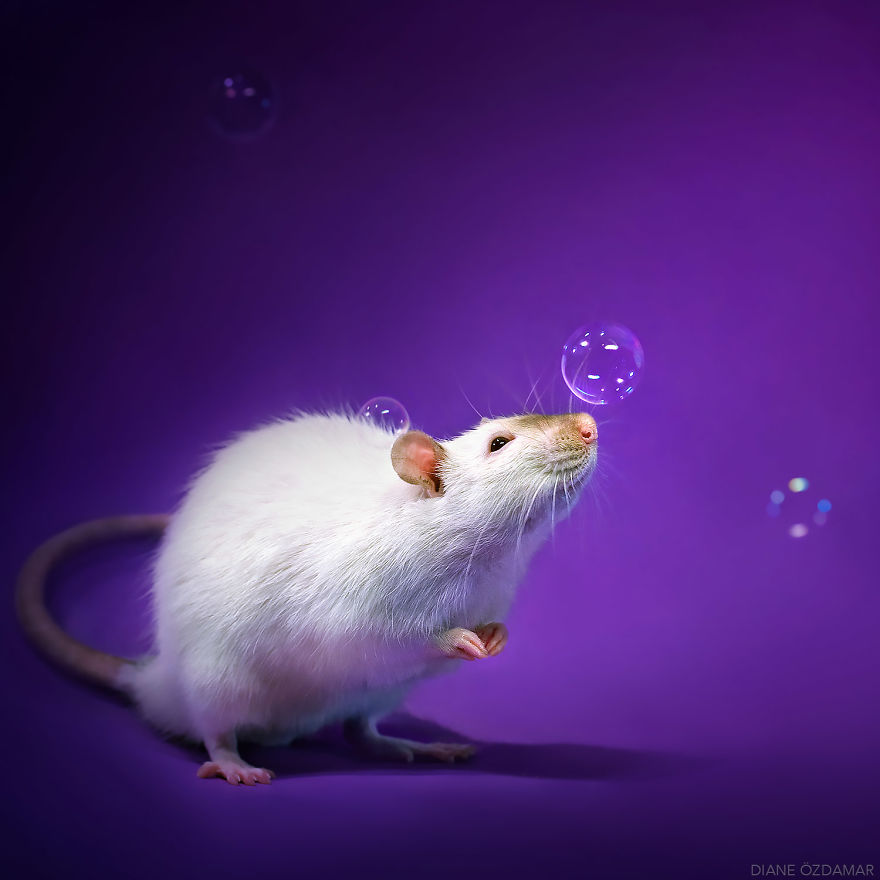 ratos-fofos (8)