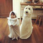 mame-riku-poodle (1)