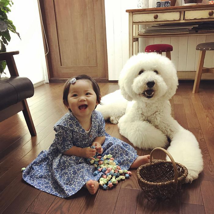 mame-riku-poodle (14)