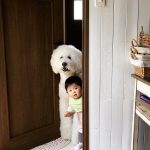 mame-riku-poodle (6)