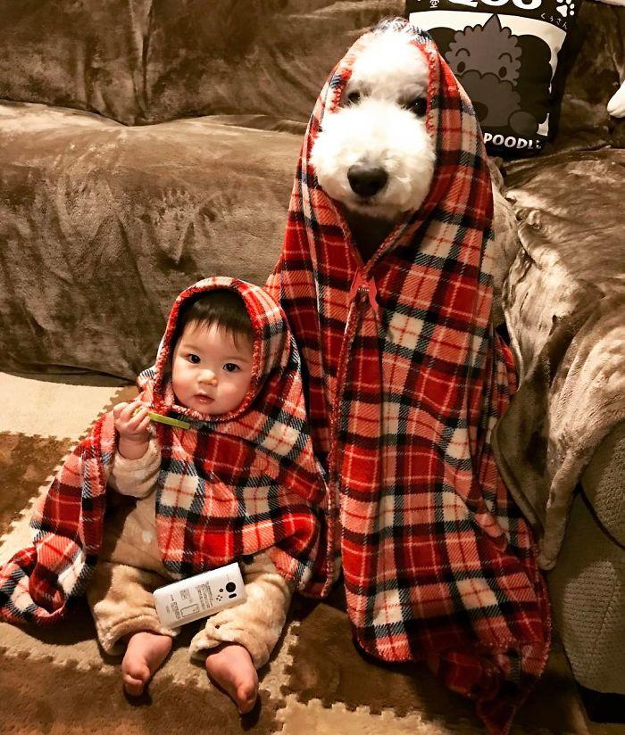 mame-riku-poodle (7)